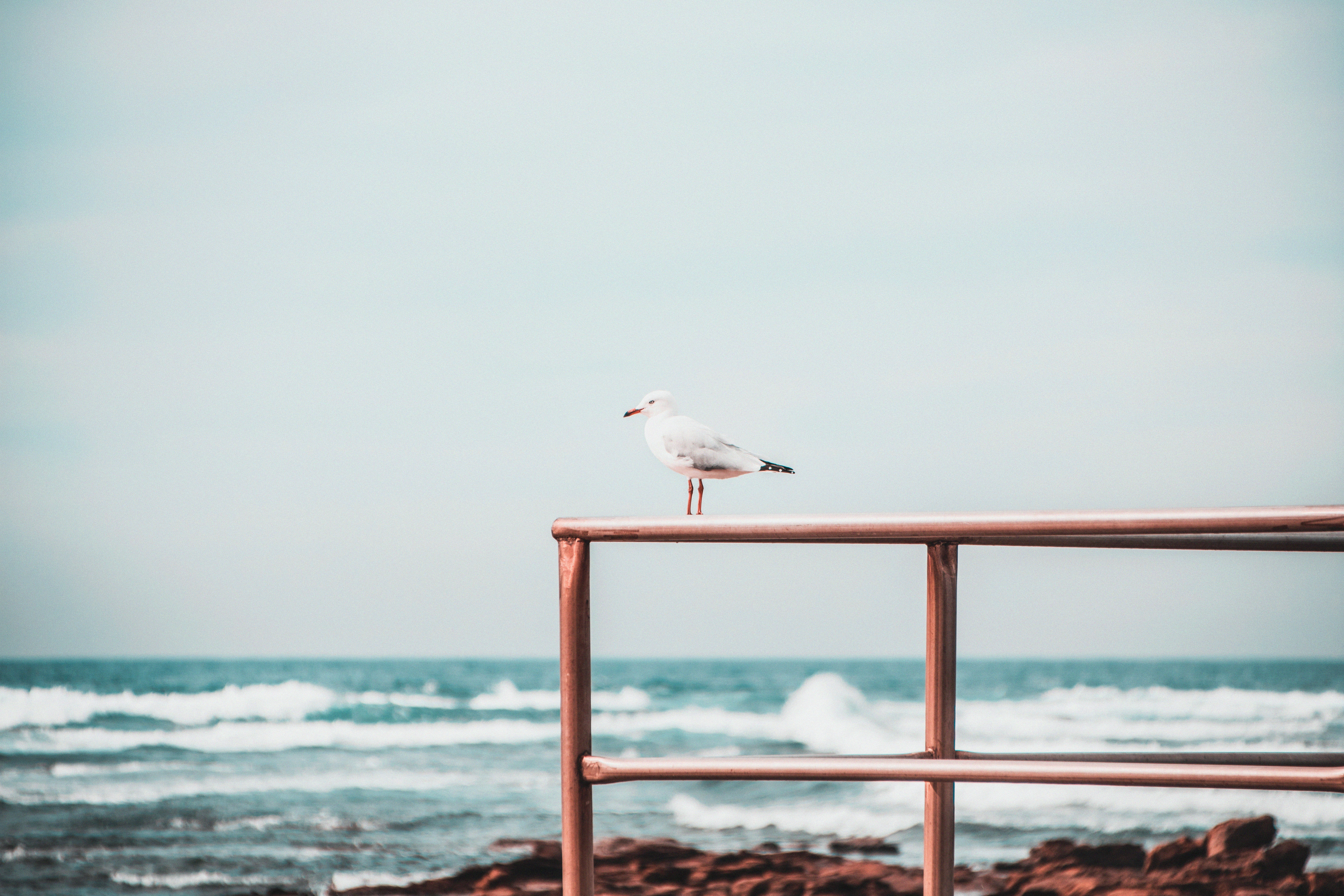 white seagull perch on red railing