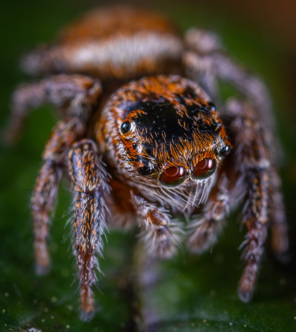 selective focus photography of brown spider on leaf