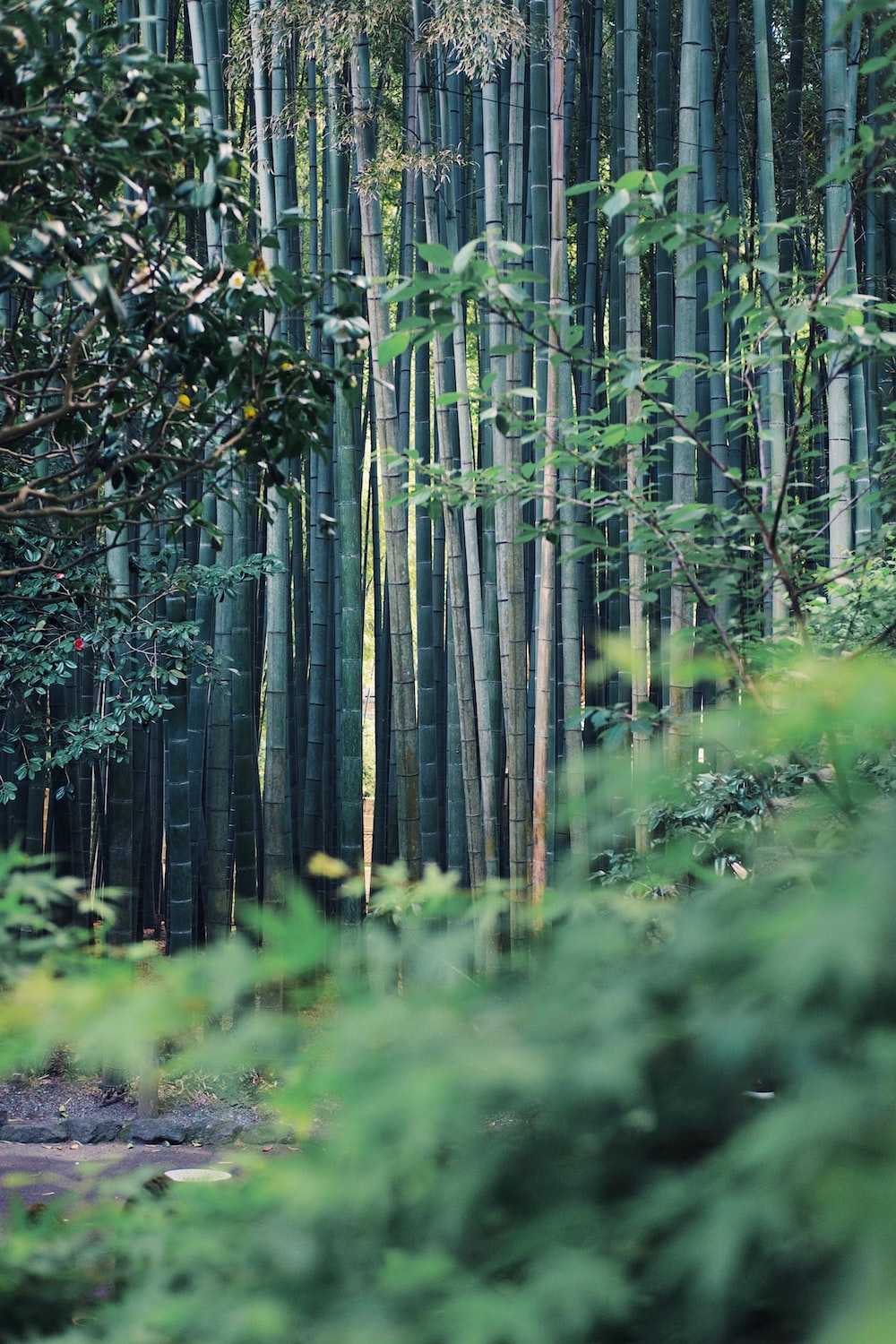 selective focus photo of green bamboo trees