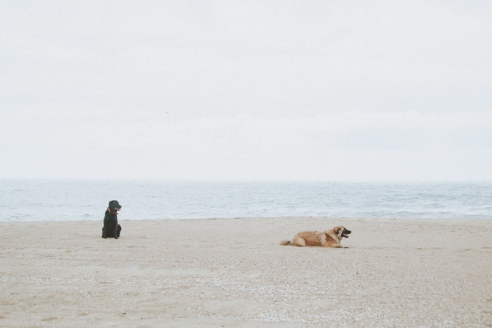 two black and tan dog on beach