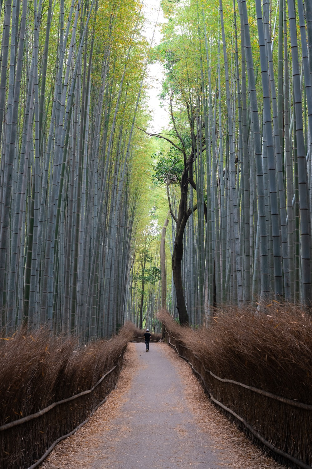 pathway with bamboo trees beside