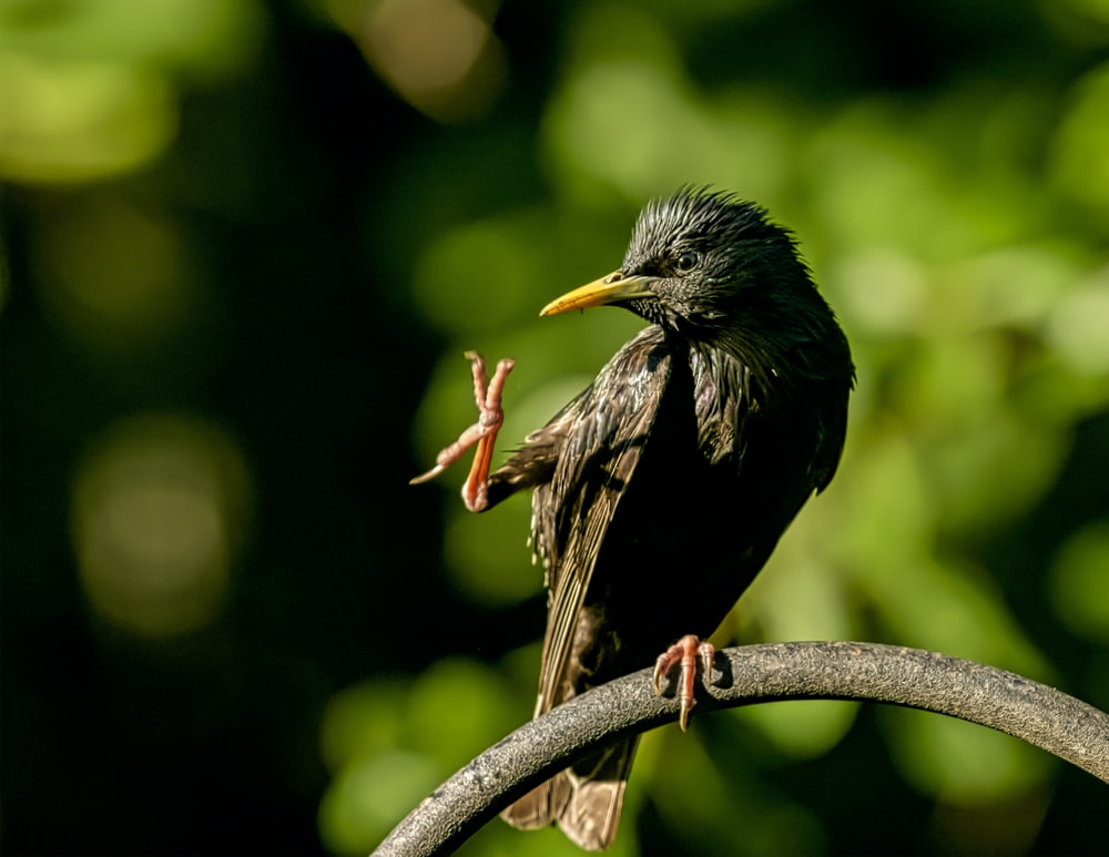 selective focus photography of black bird standing on tree branch