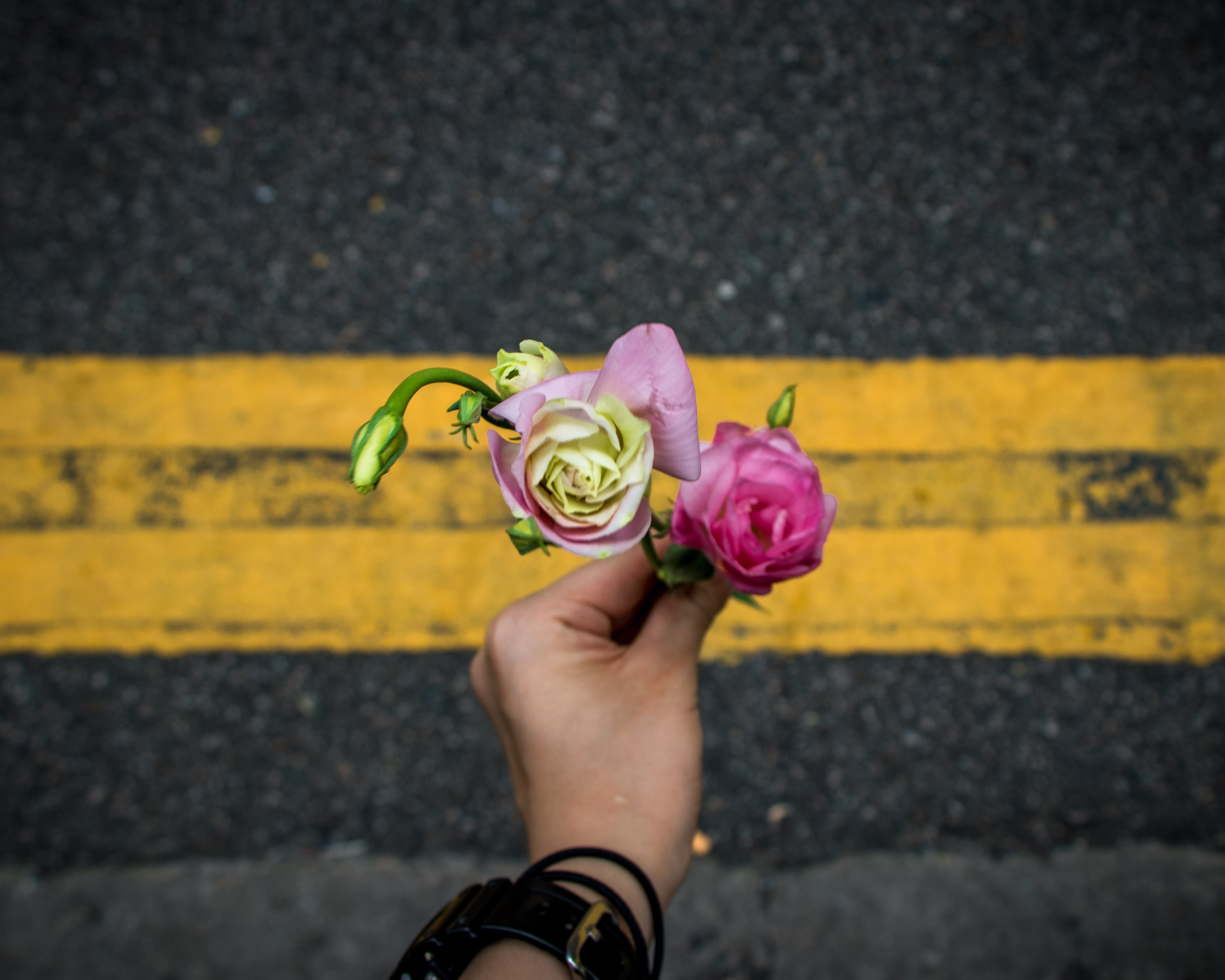 tilt-shift lens photography of person holding two pink roses at top yellow line of blacktop road