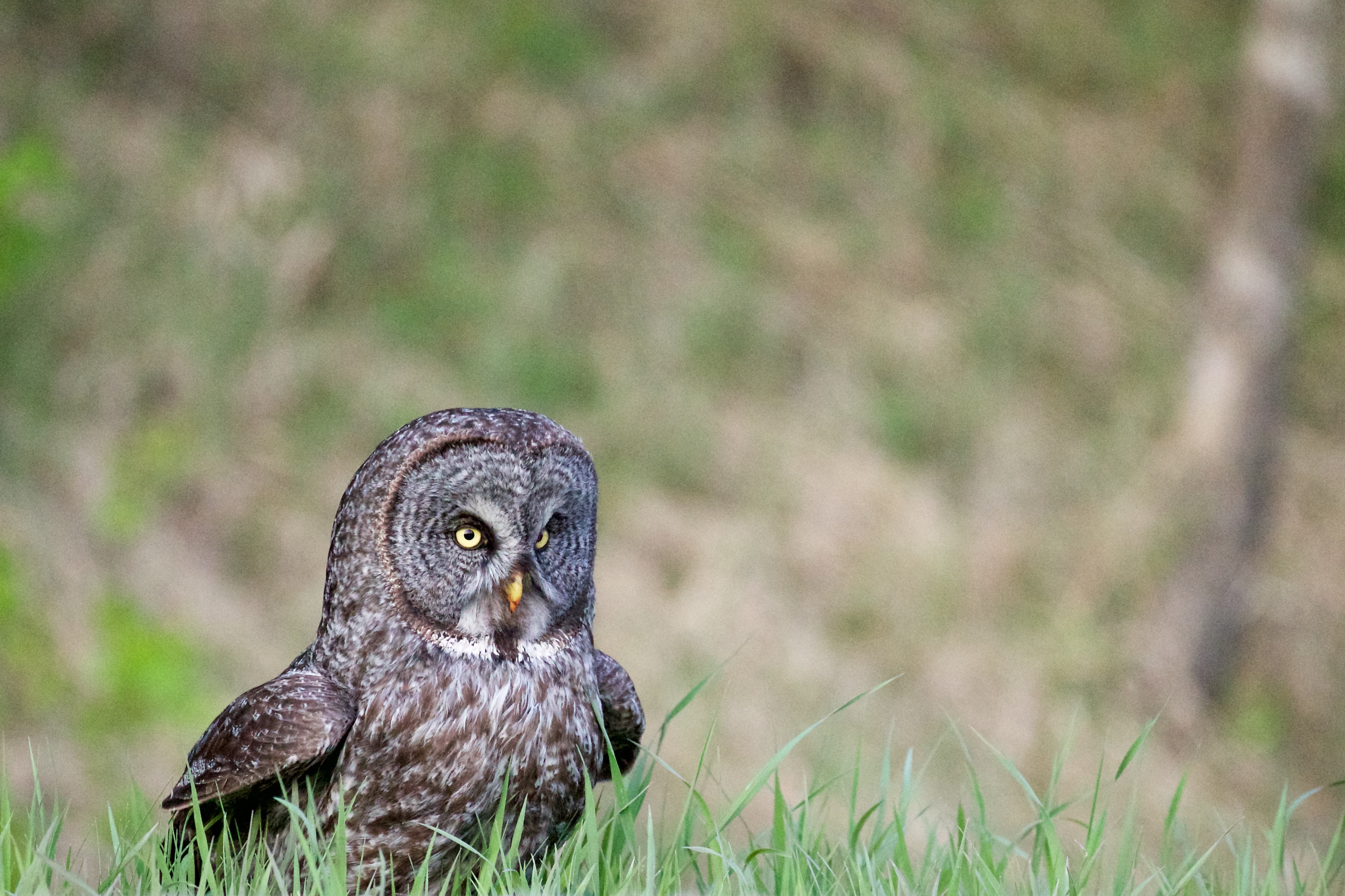 screech owl on green grass during daytime