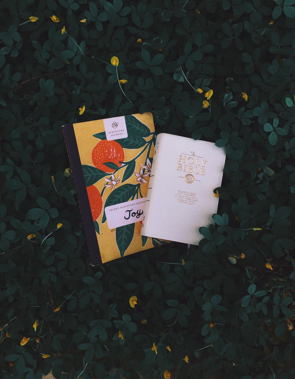 books on bushes with plant