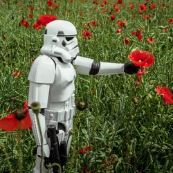stormtrooper picking red poppies during daytime
