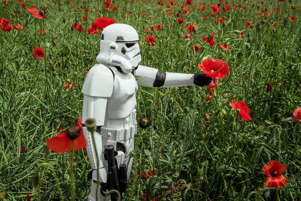 stormtrooper picking red poppies during daytime