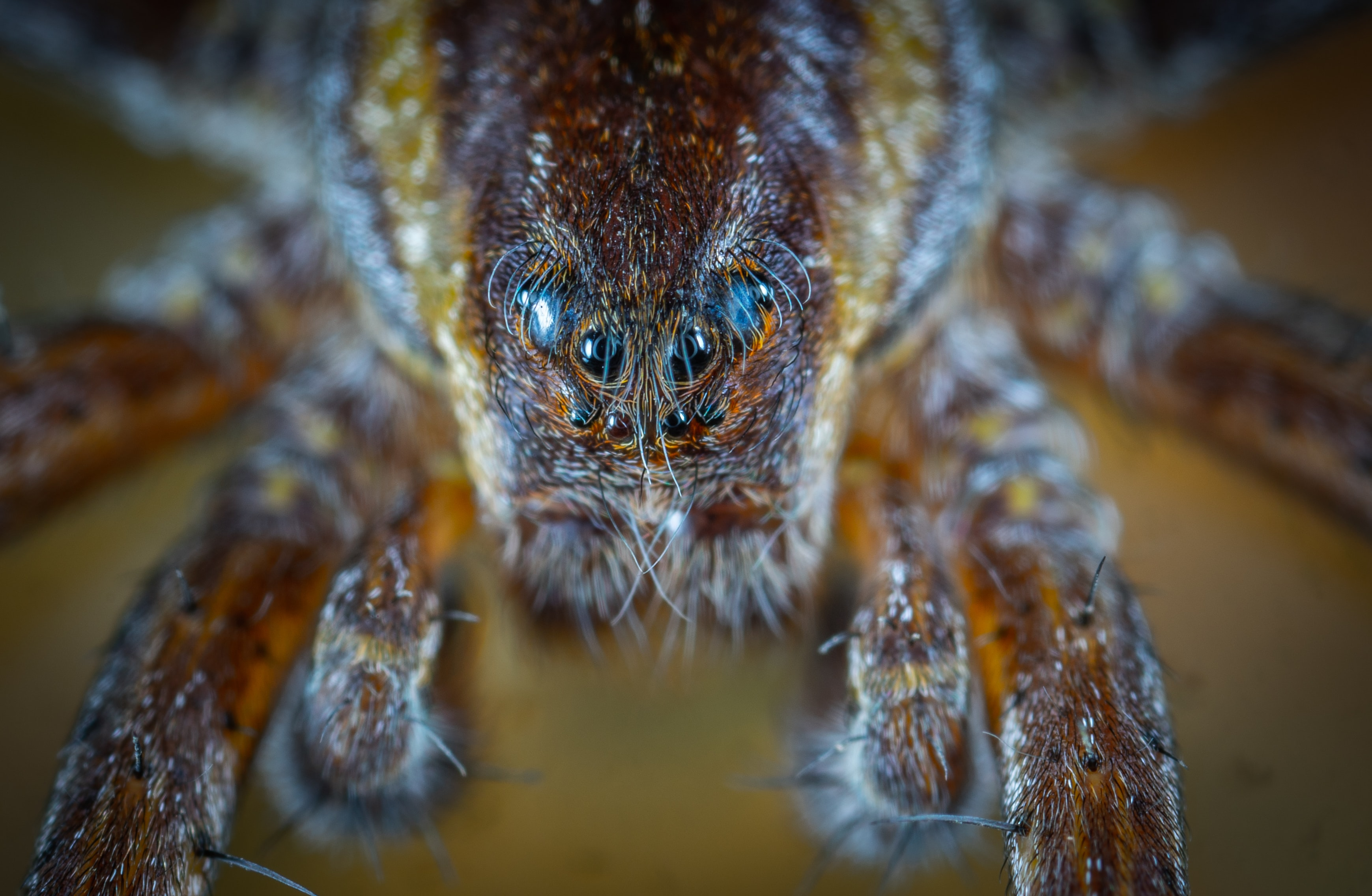 closeup photography of spider