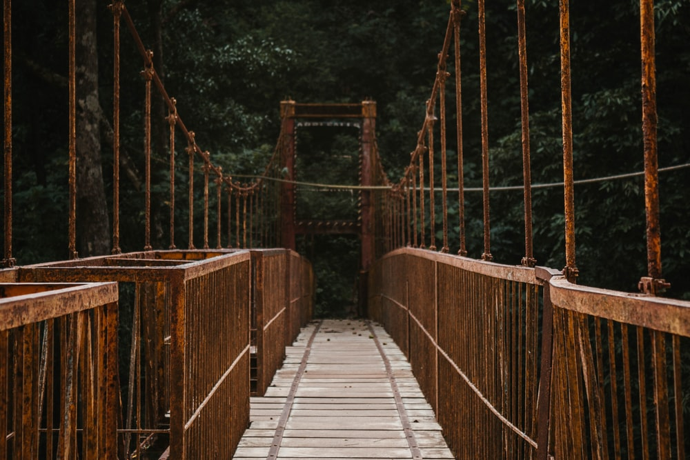 brown hanging bridge surrounded by trees
