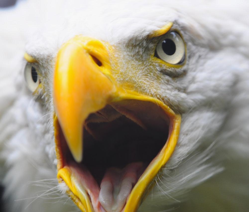 white and yellow bird