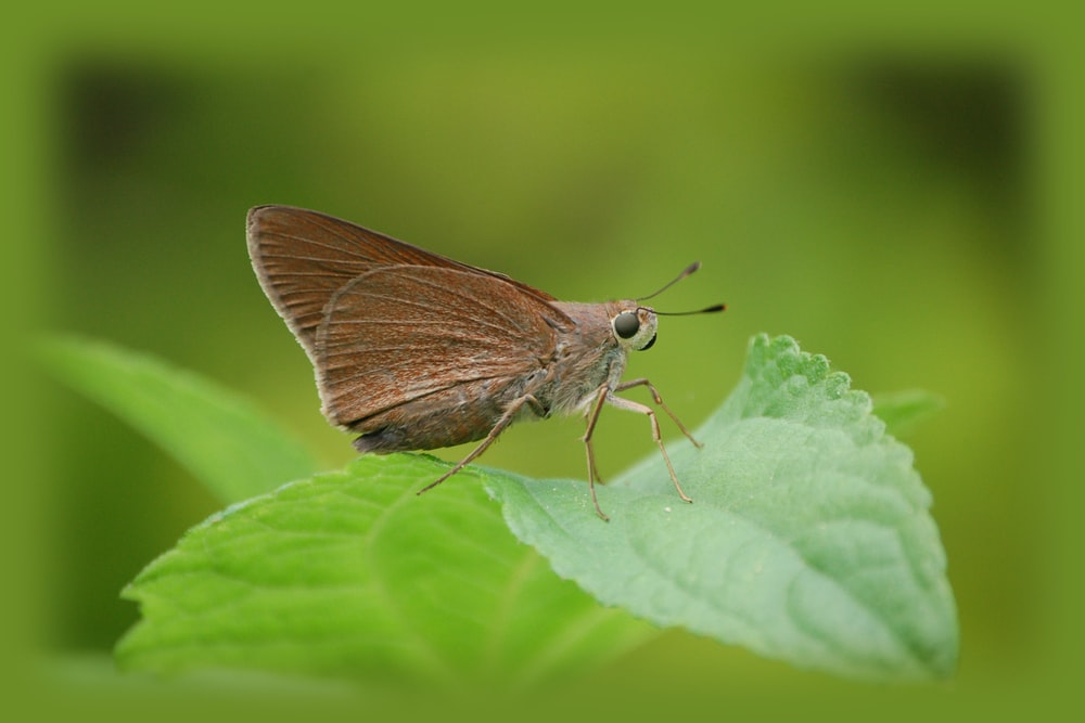 brown moth on green leaf