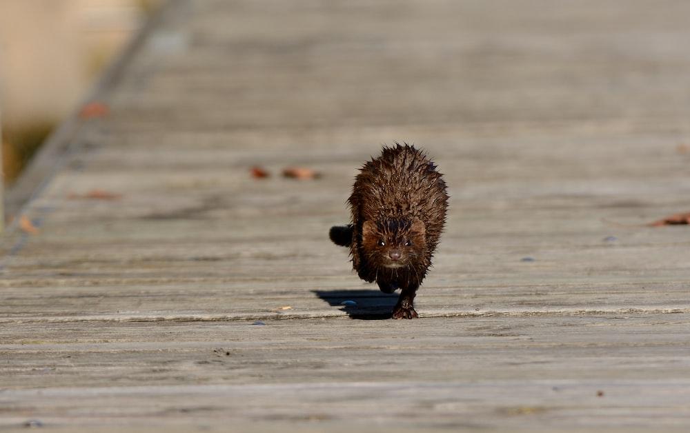 brown animal walking in middle of road