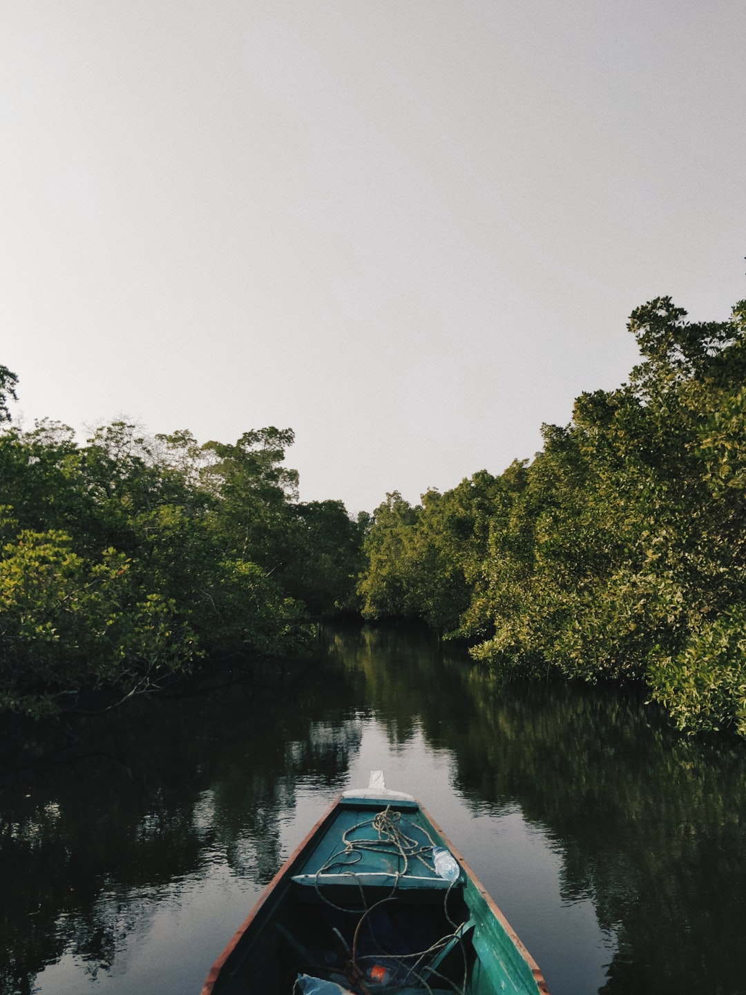 This shot was taken in the Sine Saloum delta in Senegal in early 2018. It represents the feeling of navigating your pirogue quietly through the mangroves – you are alone, surrounded by nothing but nature. The trees in mangrove forests are always submerged in the salty water, resulting in a unique ecosystem. There was no sound, apart from the sound of oysters opening and closing their shell. A truly unique and magical experience.