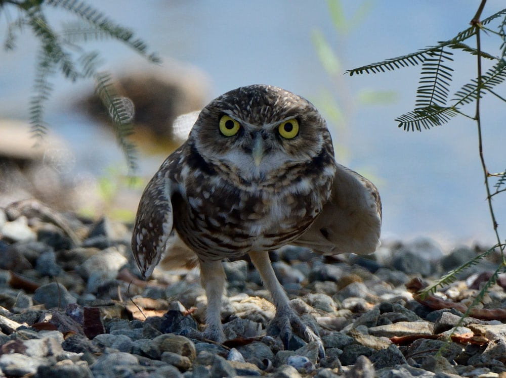 brown and white owl on grey rock