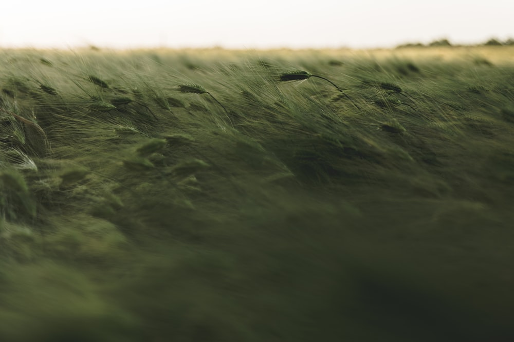 grass field timelapse photography