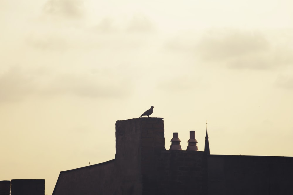 silhouette of bird on roof