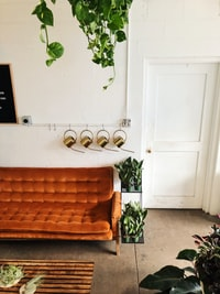green leafed plants beside brown velvet couch