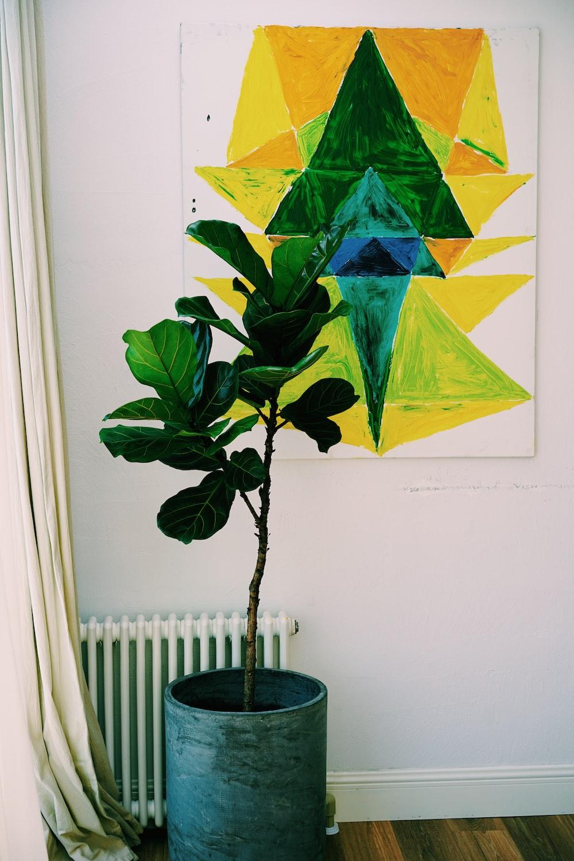 green leaf potted indoor plant