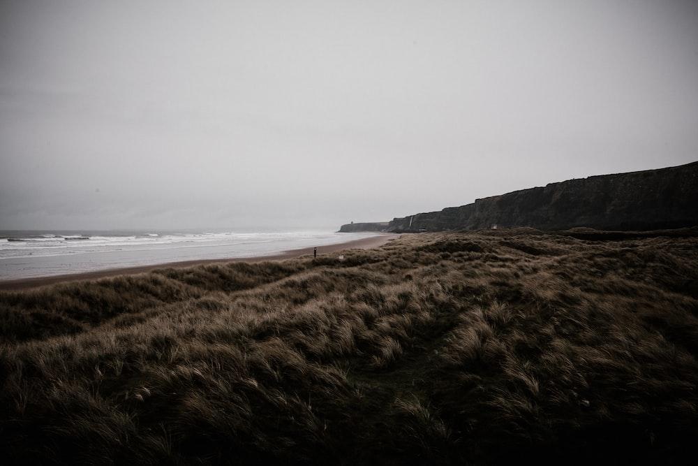 brown sand photo