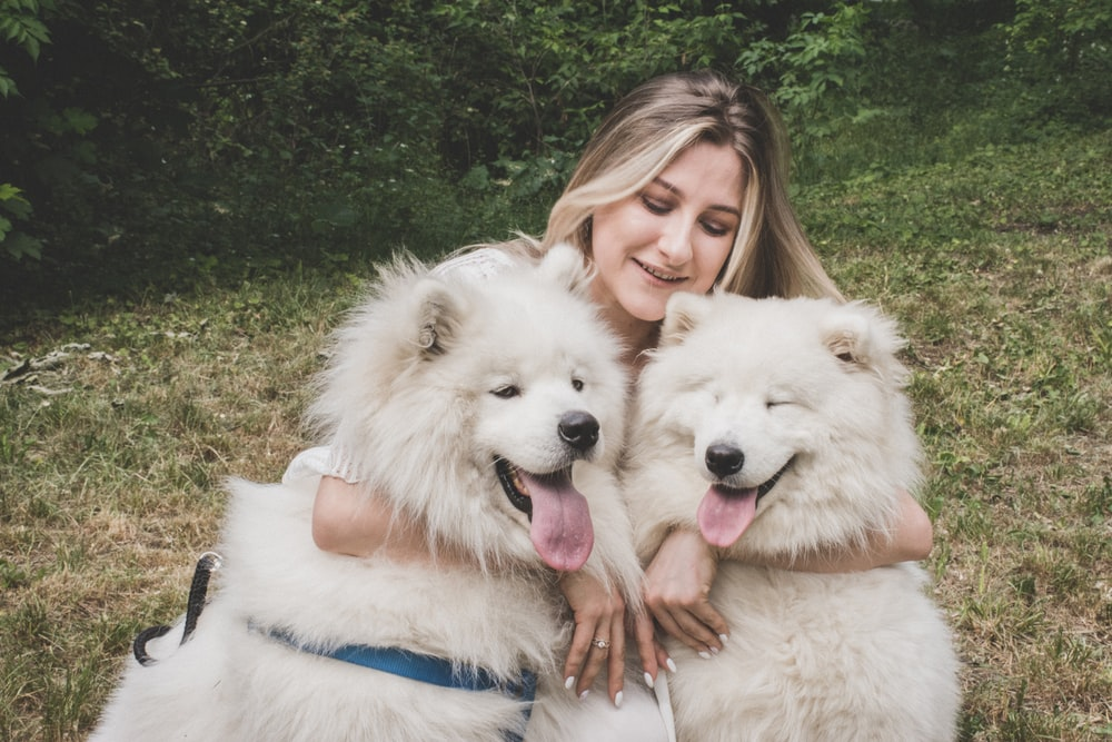 woman hugging white samoyed dogs