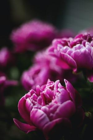 1592. Növények világa