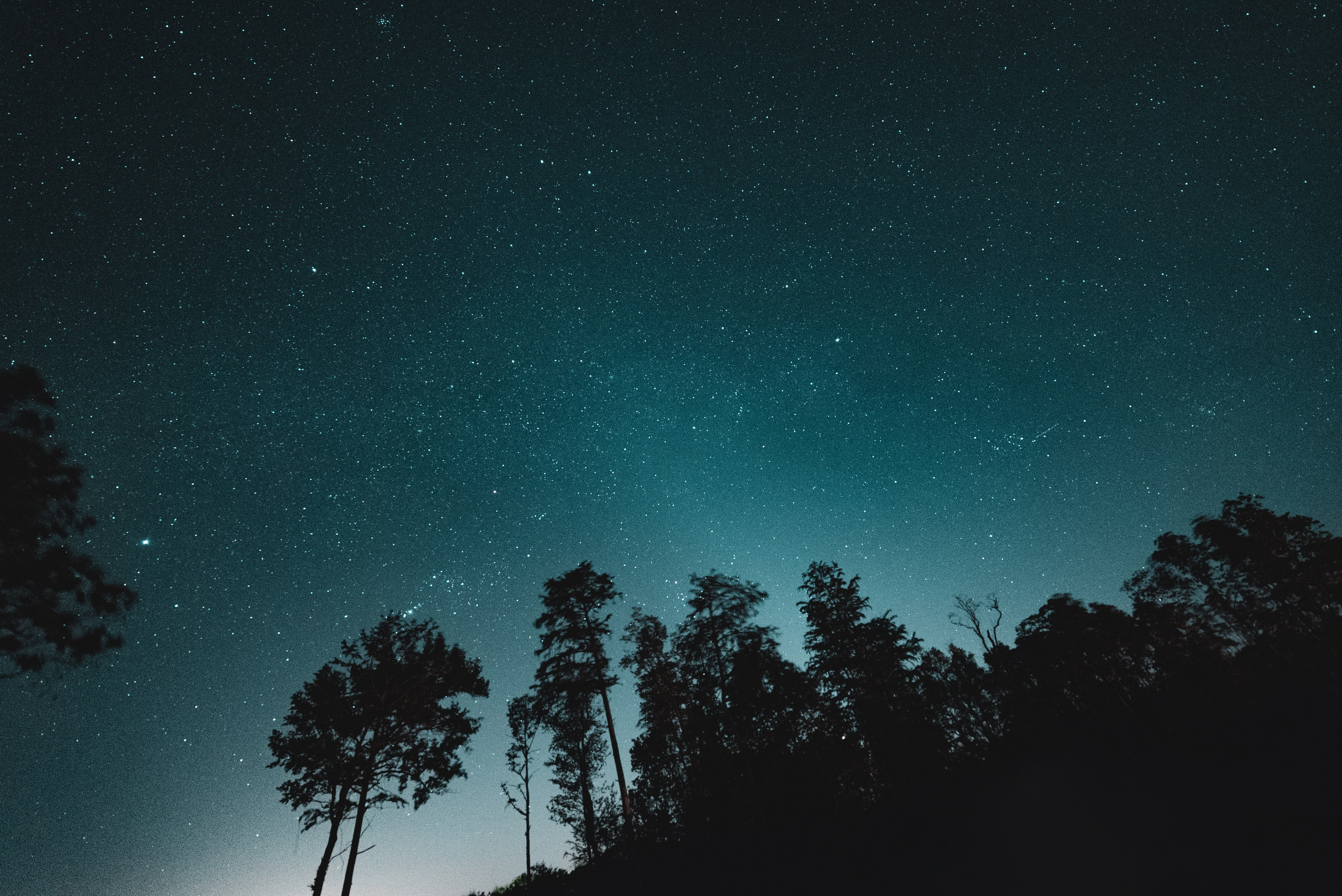 milky way over trees wallpaper