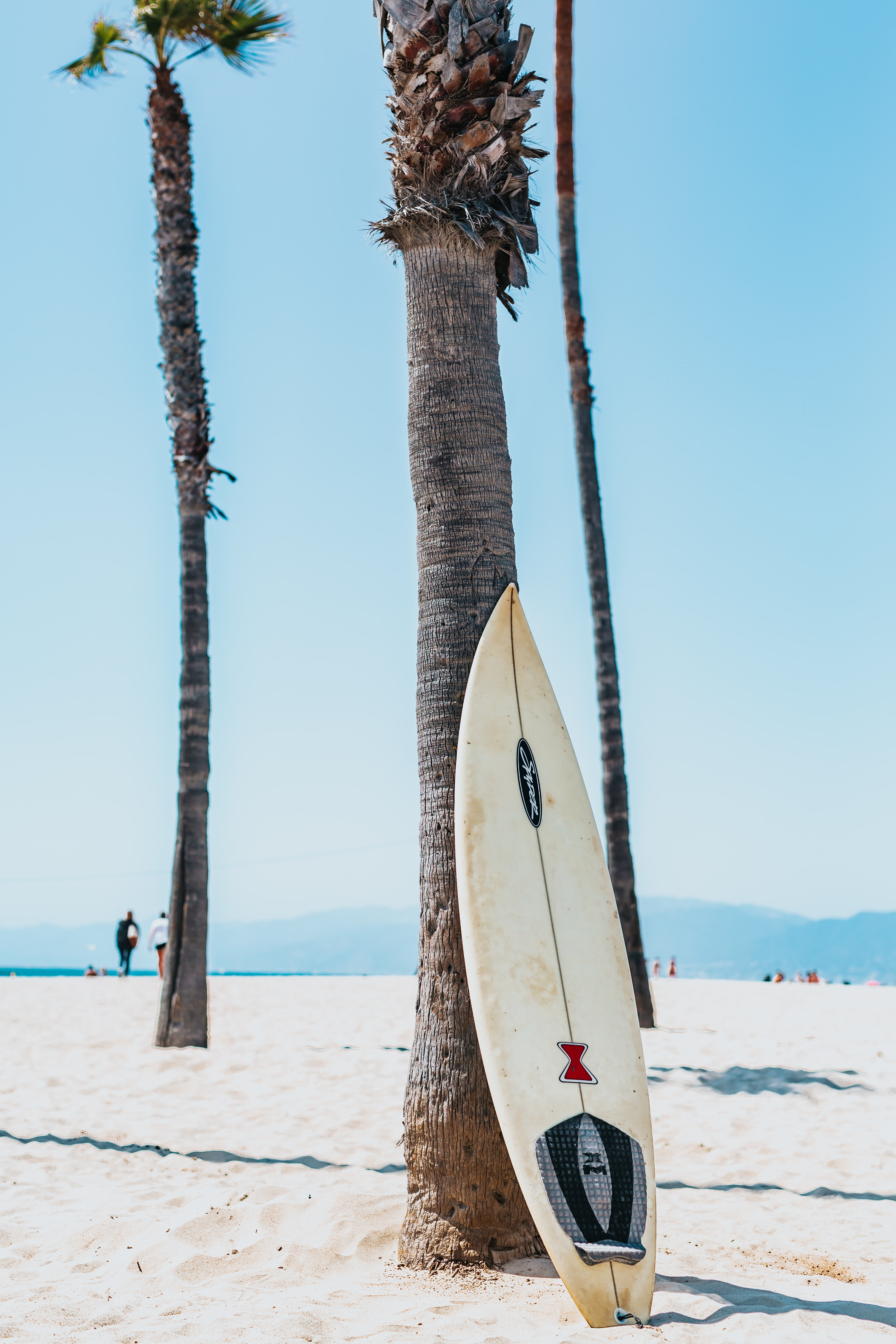 white and black surfboard leaning on gray Mexican palm tree