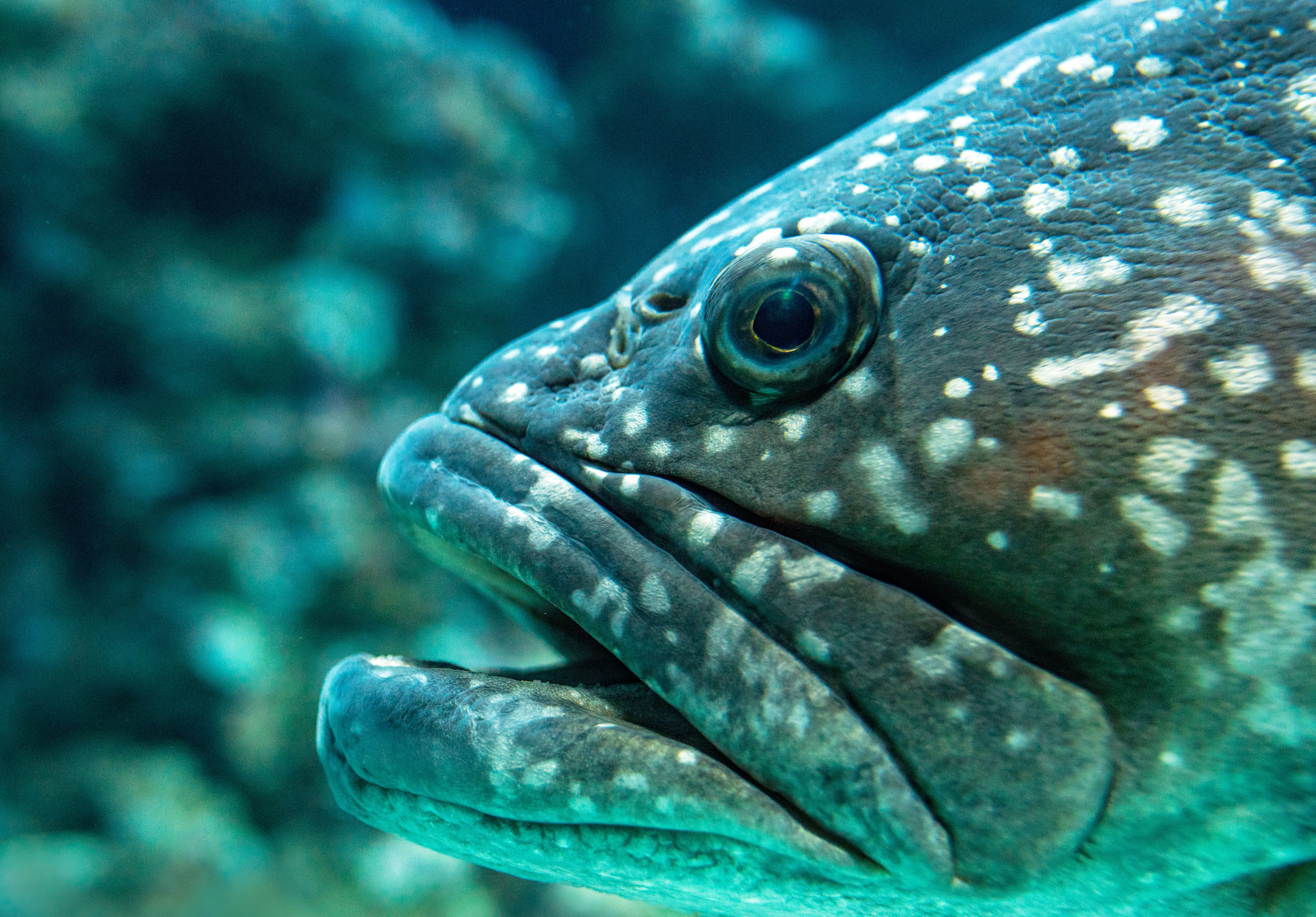 selective focus photography of gray fish
