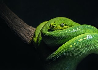 green snake on brown branch close-up photo