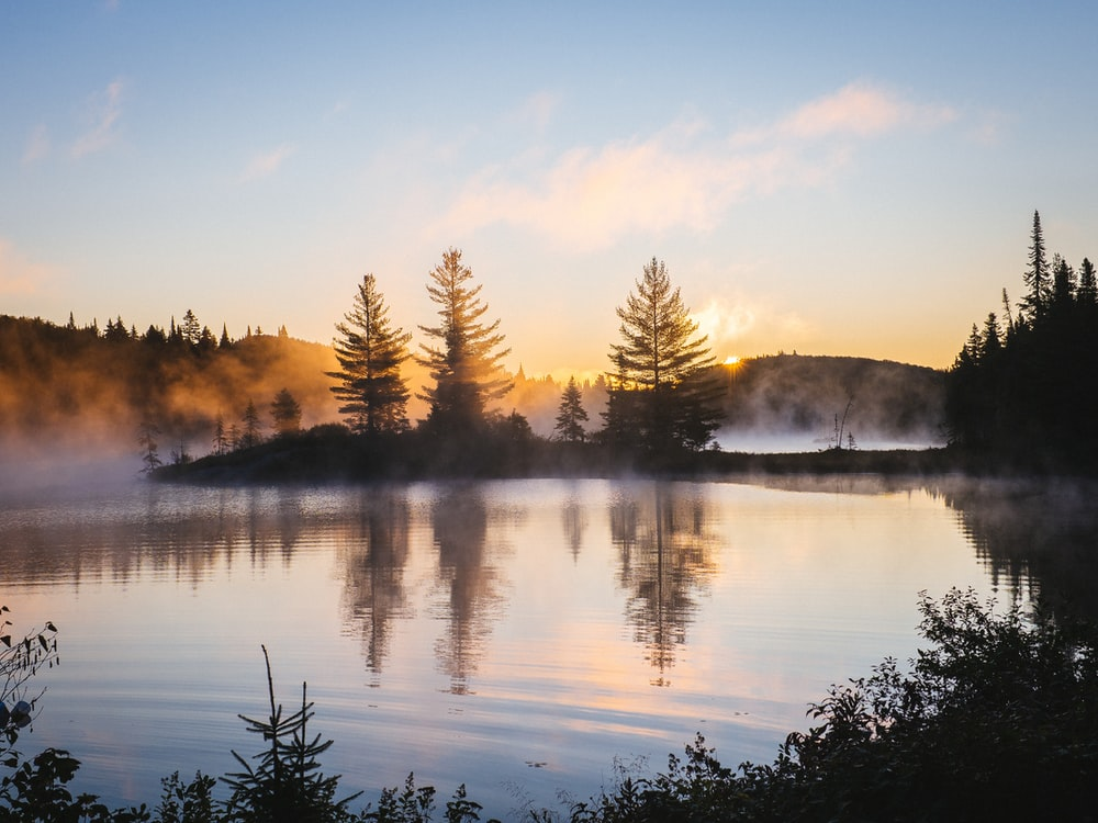 silhouette of trees and body of water in sunrise background
