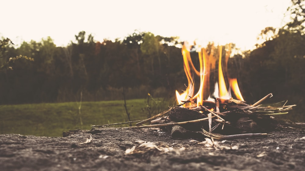 brown sticks with flame near tall trees at daytime