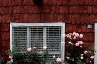 pink petaled flower near house window