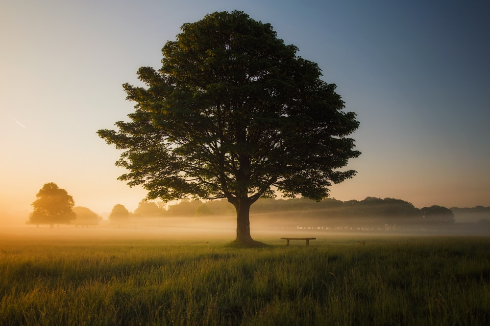 green leafed tree surrounded by fog during daytime