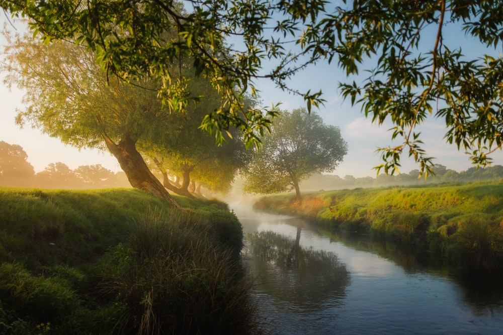 river beside trees and grass field