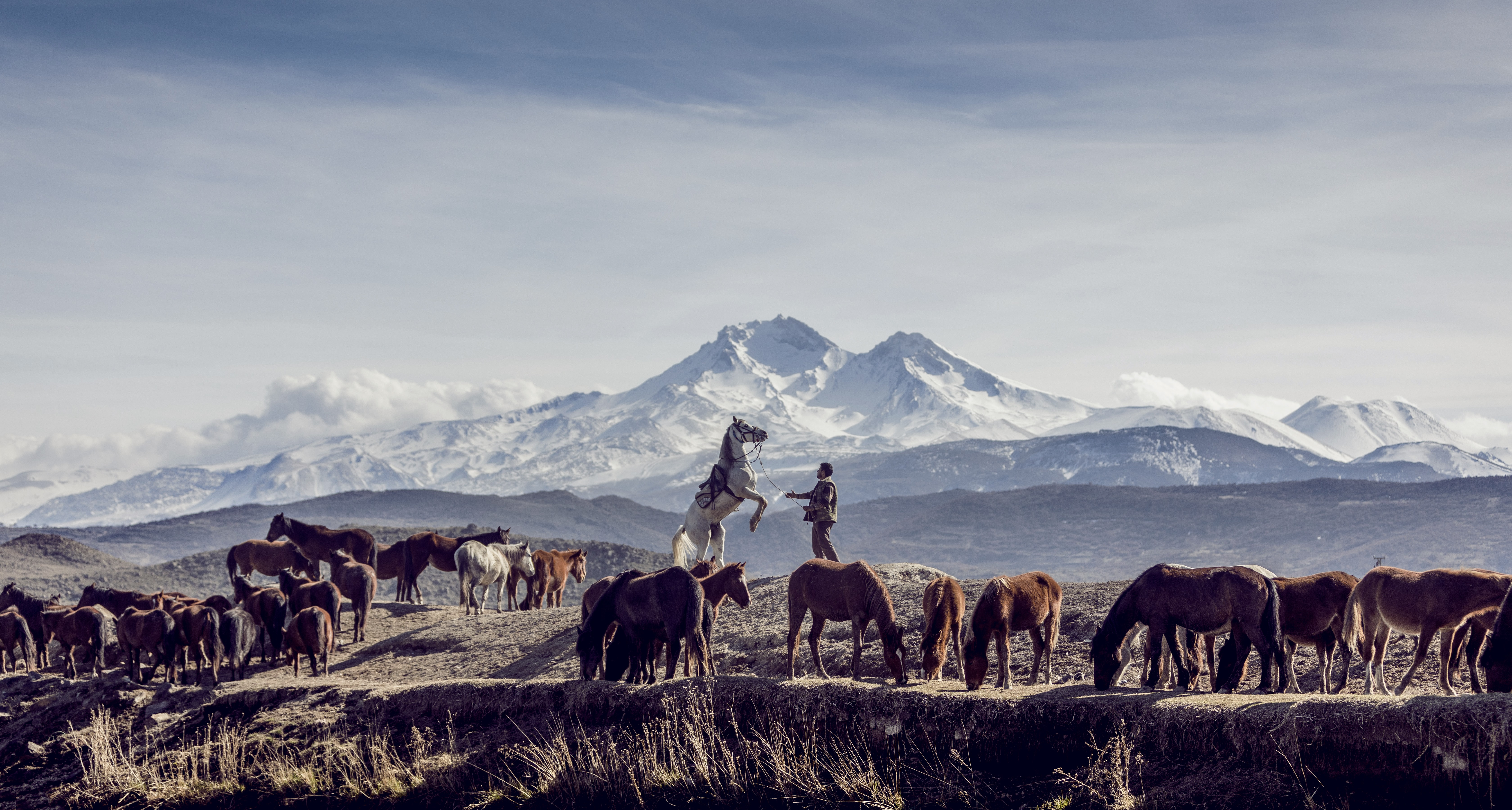 horses in brown open field viewing mountain at daytime