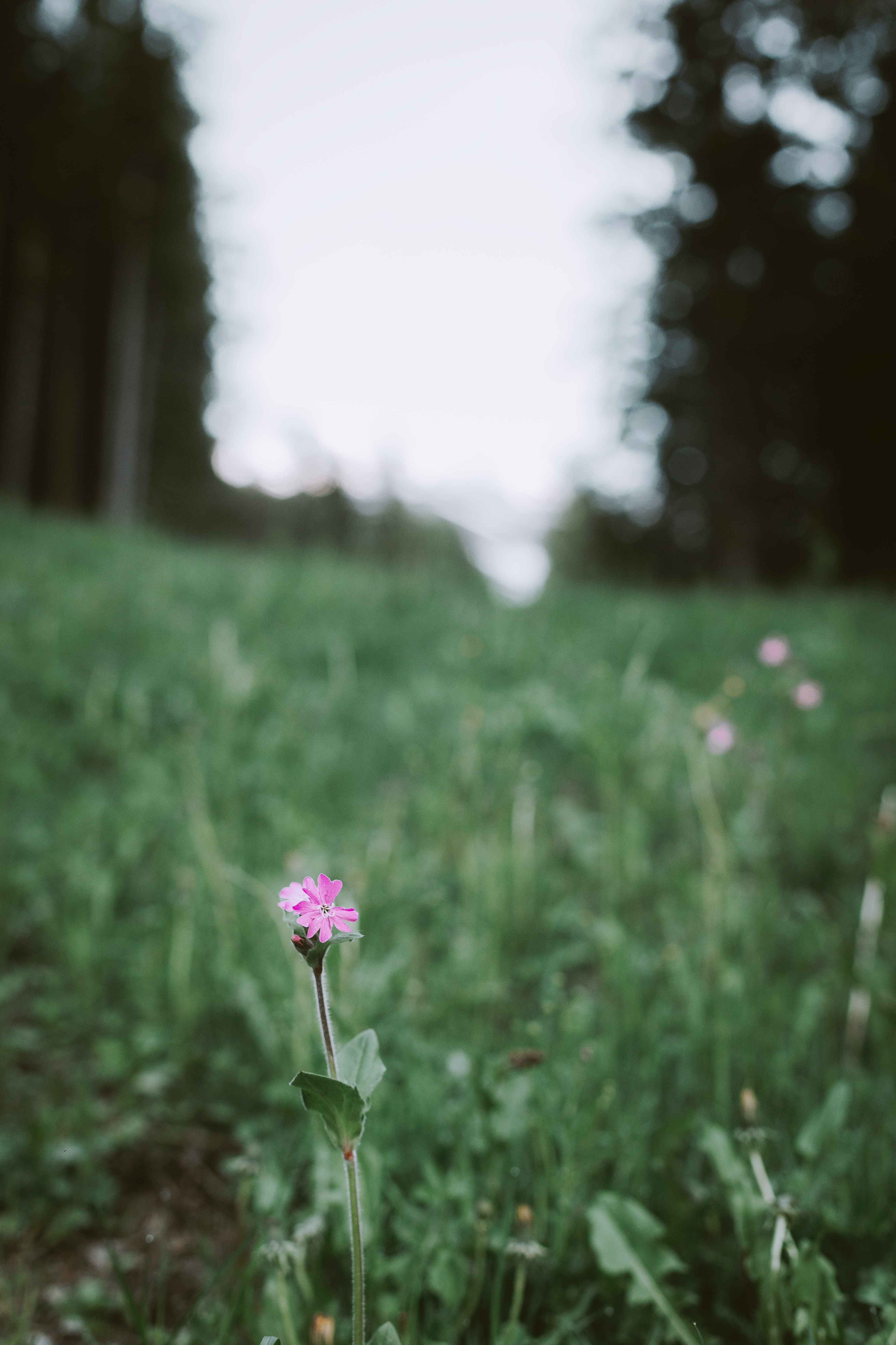 pink flower with green grass