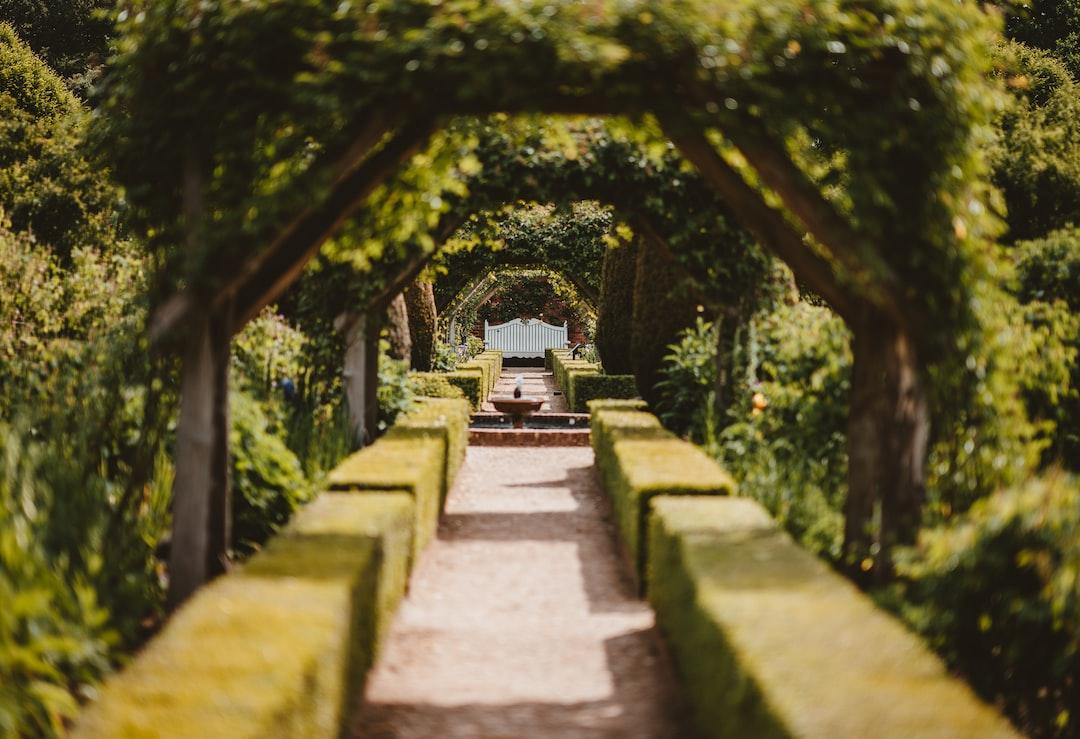 Privet lined tunnel, Mottisfont Gardens