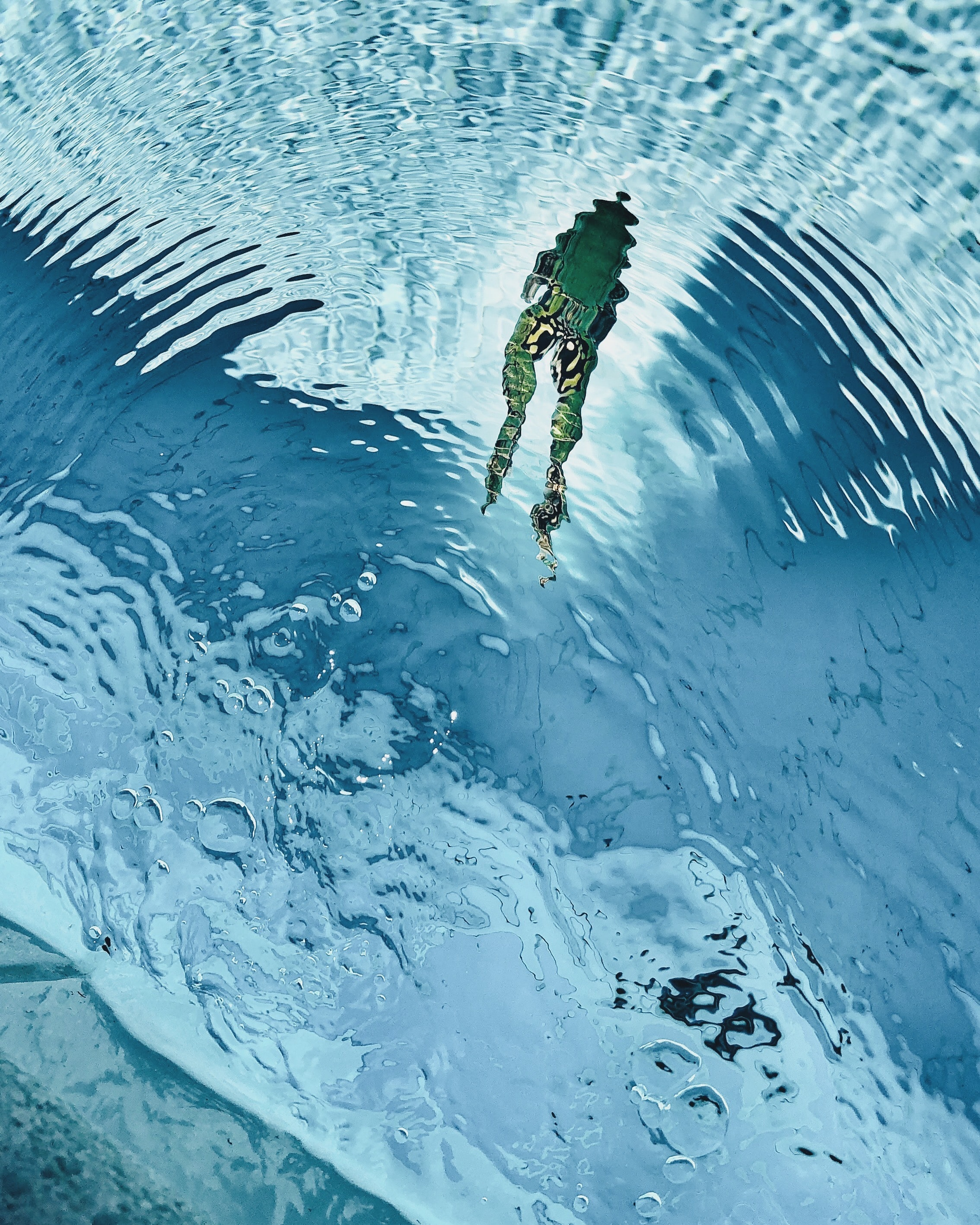 high-angle photography of green frog swimming on clear water