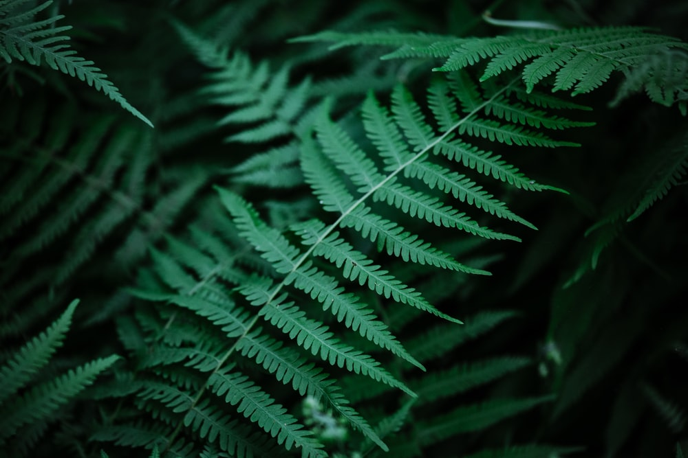 selective focus photo of green fern plant