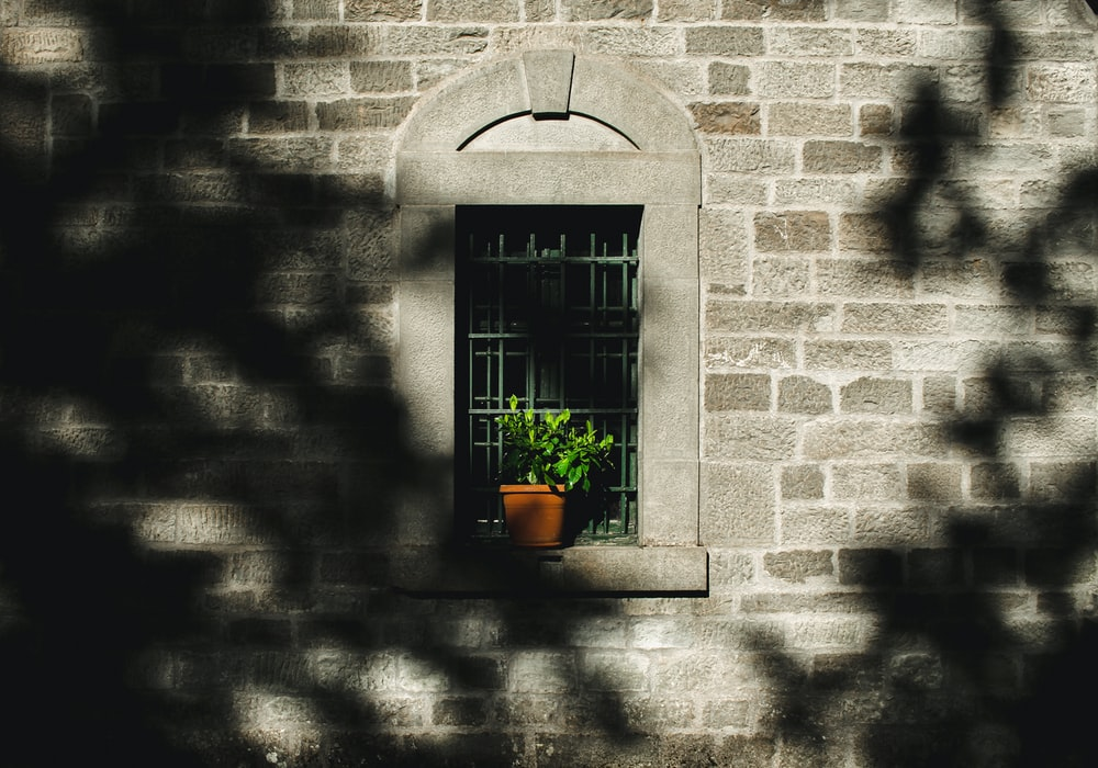 potted green leaf plant on window