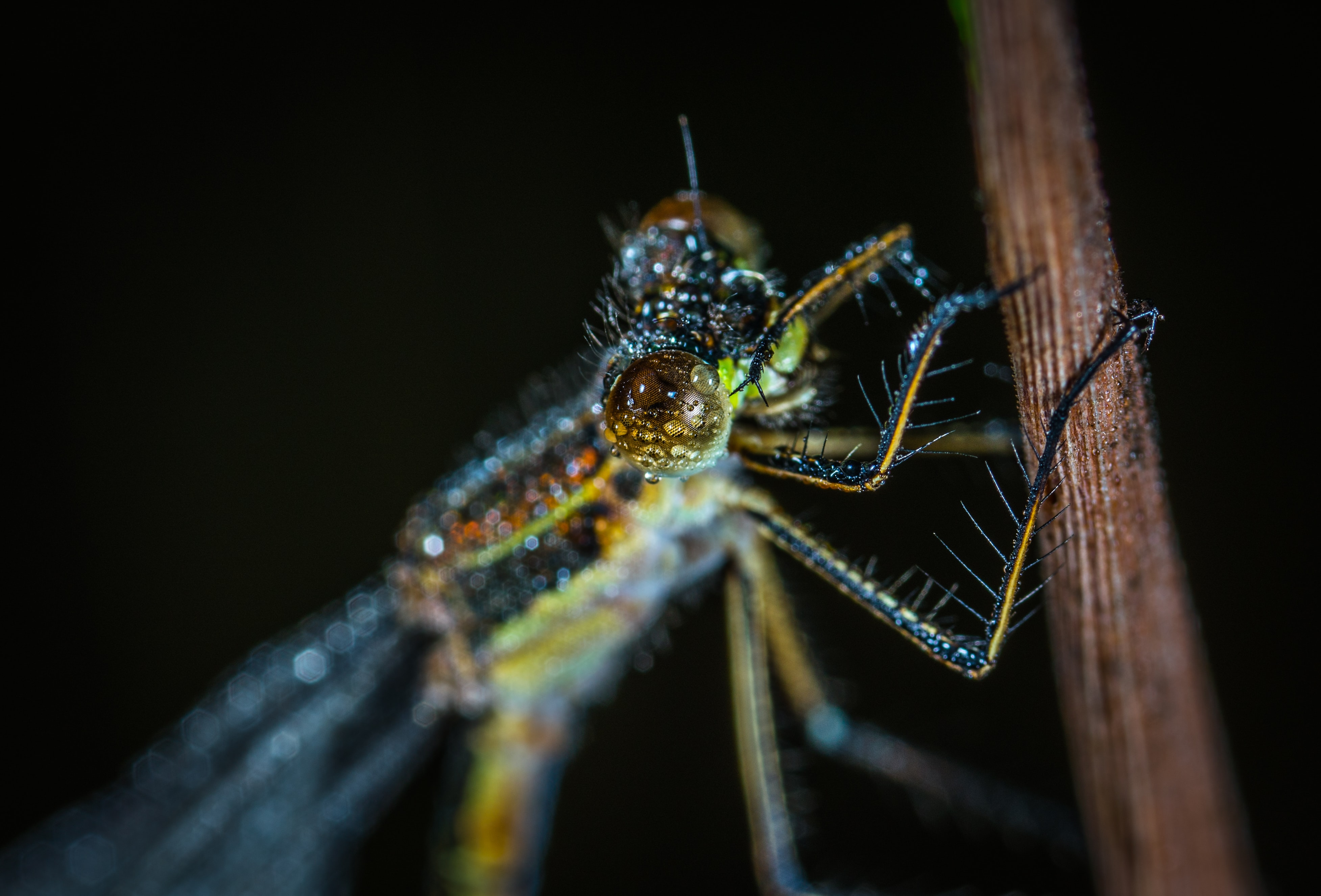 green and grey winged insect in macro photo