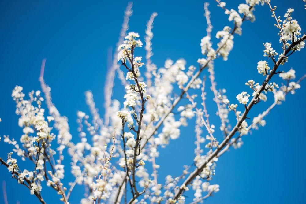 white petaled flower at daytime