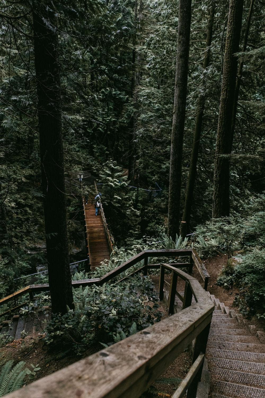 people walking on brown bridge near trees at daytime