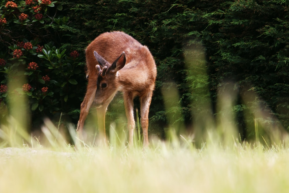 selective focus photography of brown deer