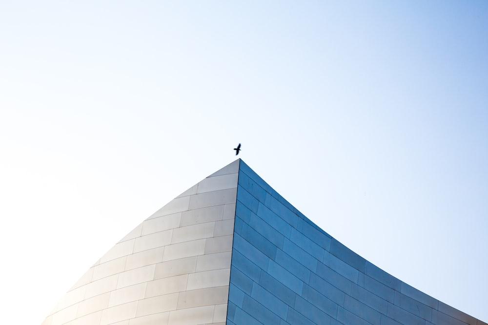 bird flying above of building