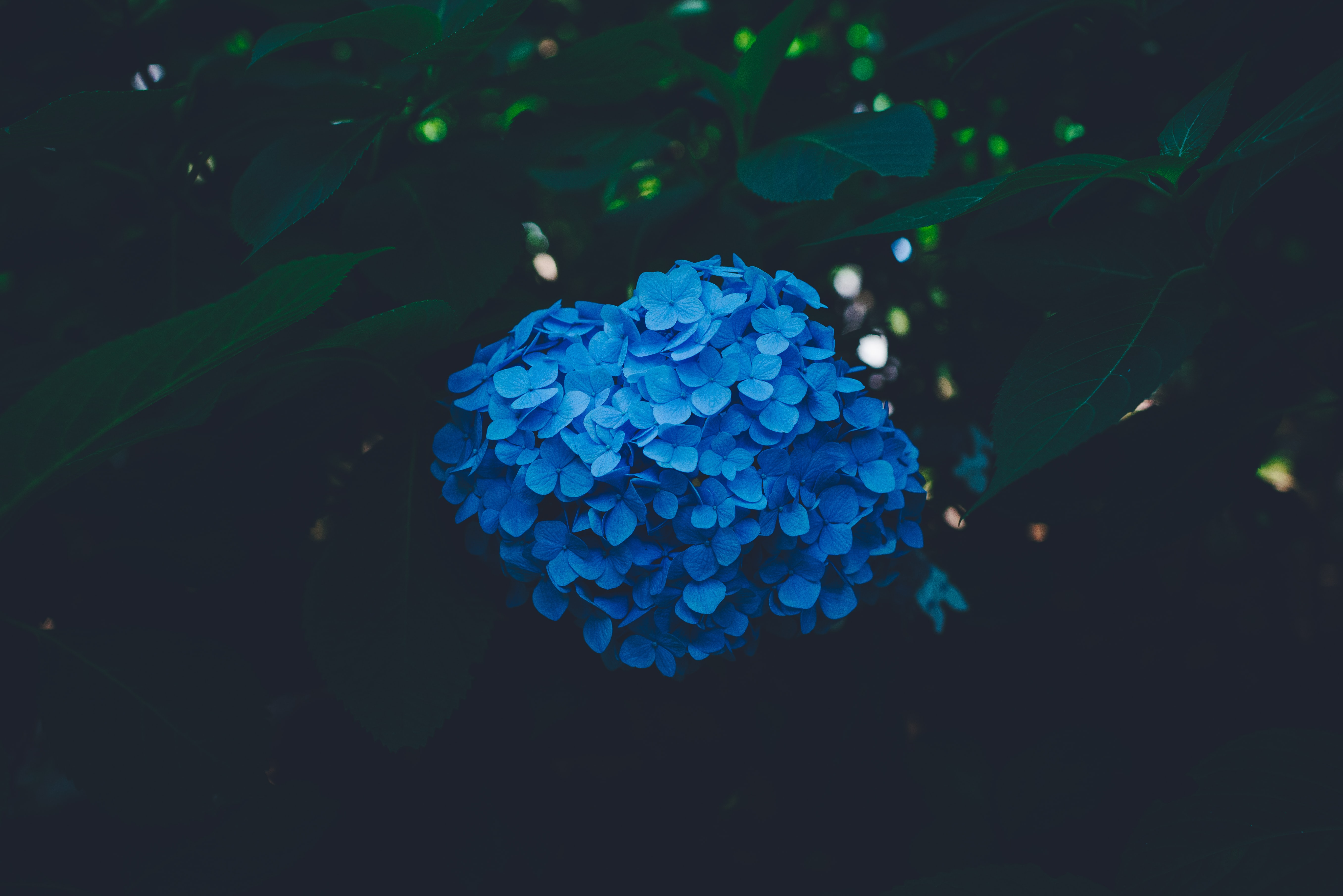close-up photography of blue petaled flower plant