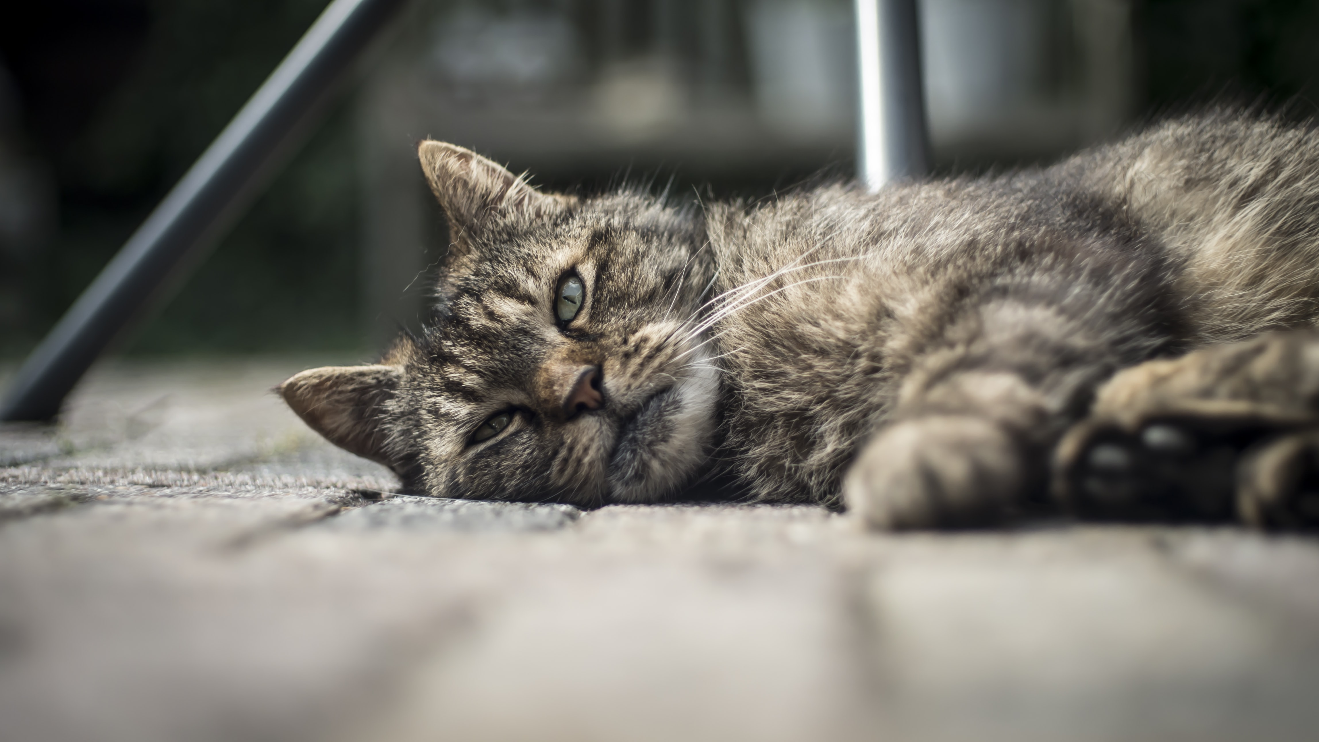 selective focus photography of lying brown tabby cat