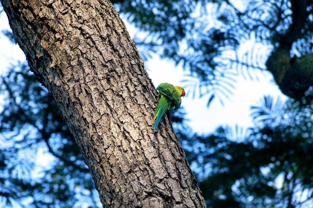 green bird on tree