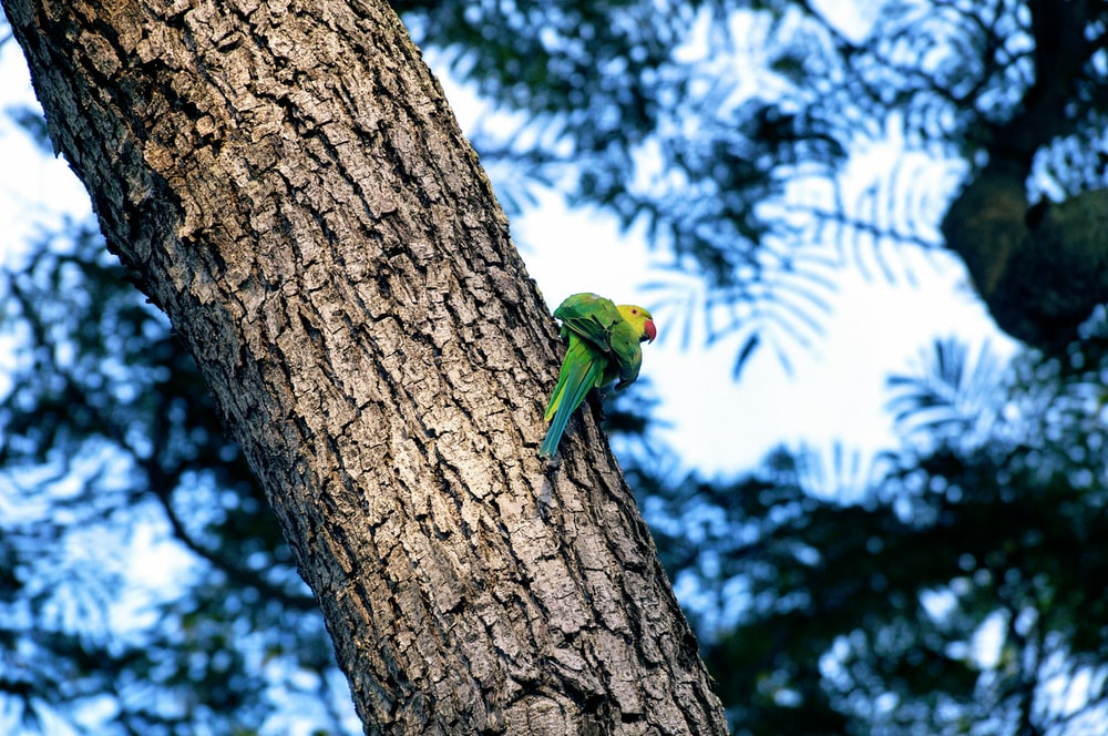 green bird on tree