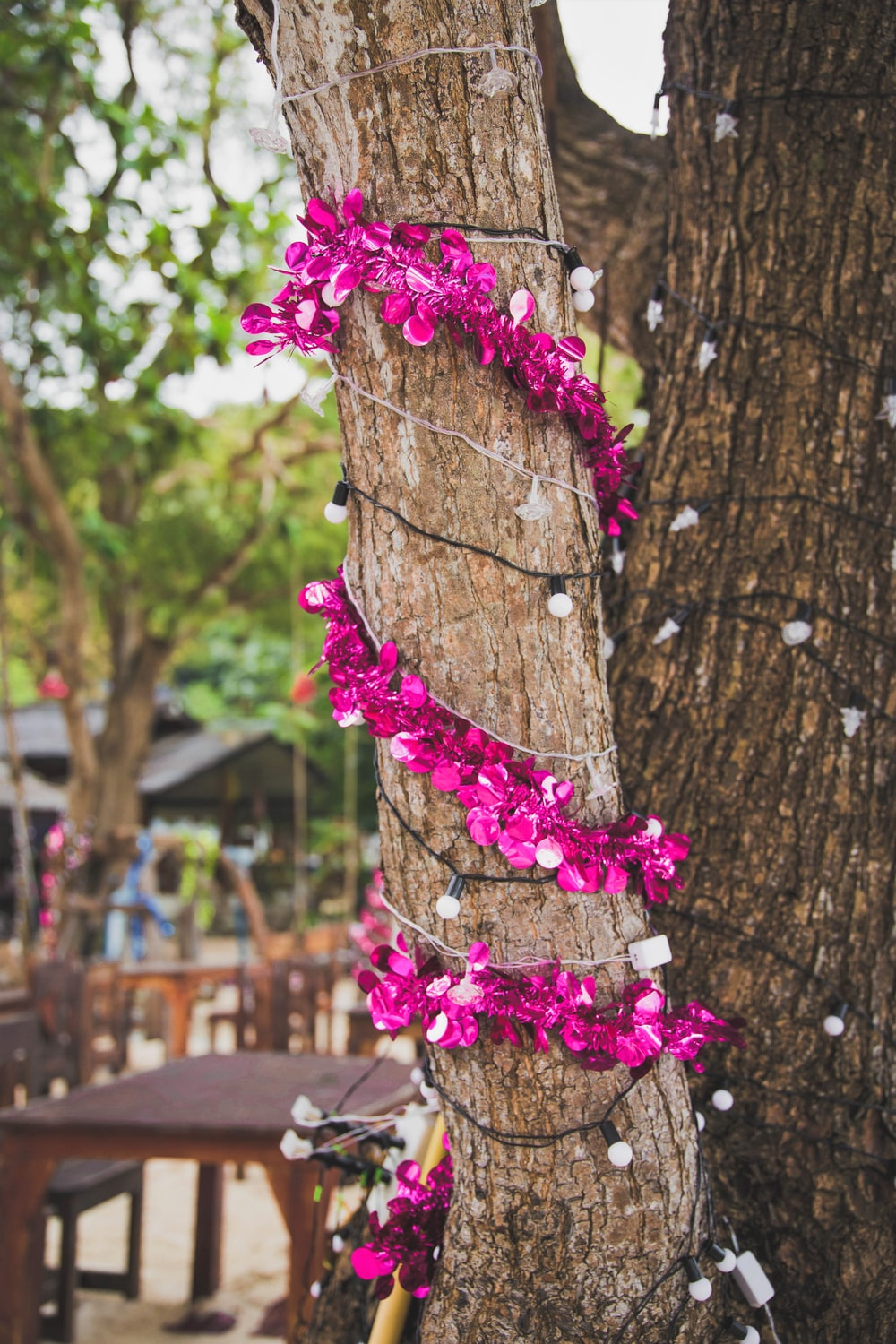 purple petaled flowers and mini string lights wrapped around tree trunk